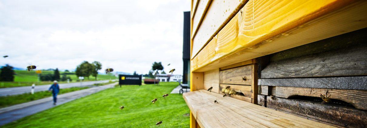 ANWANDER, Bienenhaus, Artenvielfalt
